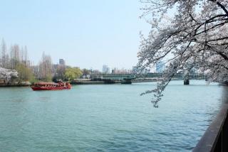 屋形船とさくらと大川