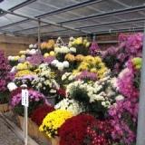 花の文化園
