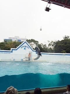 品川水族館 イルカ