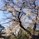 東京都立庭園美術館