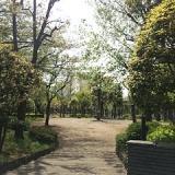 公園の風景